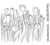 vector contour tulip daffodil... | Shutterstock .eps vector #1018539793