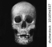 skull isolated on black... | Shutterstock . vector #1018546537