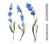 wildflower lavender flower in a ...   Shutterstock . vector #1018568983
