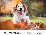 Stock photo happy white nad brown dog smiling with tank 1018617973