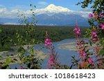 panorama in the denali national ... | Shutterstock . vector #1018618423