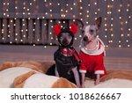 two american hairless terrier... | Shutterstock . vector #1018626667