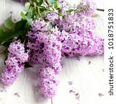 fresh flowers of lilac on a...   Shutterstock . vector #1018751833