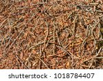 Small photo of Abstract background the aboveground part of the Nest of twigs
