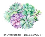 composition of succulents ... | Shutterstock . vector #1018829377