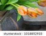 fresh tulips in vase   Shutterstock . vector #1018852933