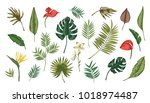 collection of tropical leaves... | Shutterstock .eps vector #1018974487