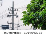 green leaves behind in the... | Shutterstock . vector #1019043733