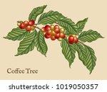 coffee tree elements  retro... | Shutterstock . vector #1019050357