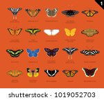us butterfly species name set 1 | Shutterstock .eps vector #1019052703