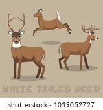 deer white tailed cartoon... | Shutterstock .eps vector #1019052727