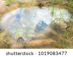 the blue sky in the puddle | Shutterstock . vector #1019083477