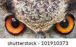Eyes Of Owl Eagle Very Close U...