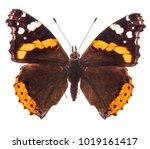 red admiral butterfly  vanessa... | Shutterstock . vector #1019161417
