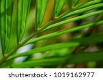 abstract tropical nature ... | Shutterstock . vector #1019162977