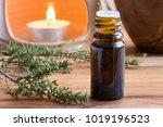 a dark bottle of thyme...   Shutterstock . vector #1019196523