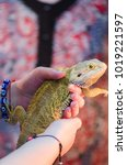 Small photo of Bearded Agama sits on the buyer's hand at the pet store. The selection of a new pet. Terrarium.