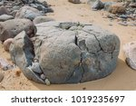 old rocks at baltic seam  sand... | Shutterstock . vector #1019235697
