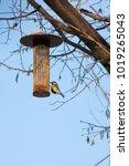 great tit on bird feeder on... | Shutterstock . vector #1019265043