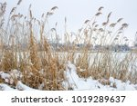 beautiful snowfall. winter... | Shutterstock . vector #1019289637