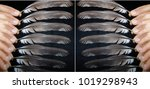 hands and plumage   Shutterstock . vector #1019298943