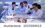 medical doctors forensics team... | Shutterstock . vector #1019304013