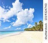secluded beach on saona island  ... | Shutterstock . vector #1019324743