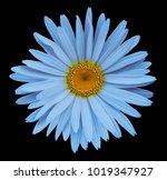 blue flower chamomile on the... | Shutterstock . vector #1019347927