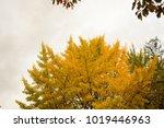 autumn scenery in and around... | Shutterstock . vector #1019446963