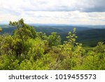 forest mountains | Shutterstock . vector #1019455573