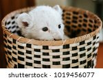 White Lion Cub In Basket...