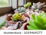 closeup image of indoor cactus... | Shutterstock . vector #1019469277