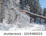 Huge Tree Causing Damage On Th...