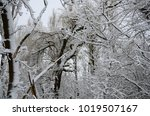 winter landscape with snow   Shutterstock . vector #1019507167