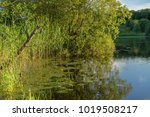 tranquil fresh water lake with...   Shutterstock . vector #1019508217