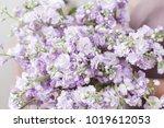 spring floral. fresh a bouquet... | Shutterstock . vector #1019612053