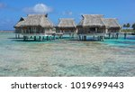 tropical bungalows with... | Shutterstock . vector #1019699443
