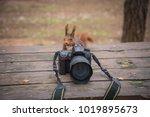 Squirrel Photo  Surprised