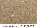 fossil shell on the sand beach  ...   Shutterstock . vector #1019908357