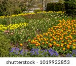 a garden bed of spring flowers  ...
