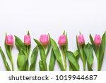 top view of pink tulips... | Shutterstock . vector #1019944687