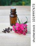 essential oil of cloves  clove... | Shutterstock . vector #1019997673