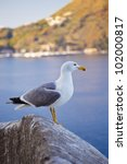 Seagull watching the sea, Lipari - stock photo
