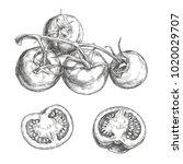 vector set of fresh vegetables... | Shutterstock .eps vector #1020029707