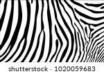 realistic abstract zebra skin...   Shutterstock .eps vector #1020059683