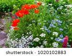 colourful summer uk cottage... | Shutterstock . vector #1020102883