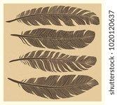 set of grunge vintage bird... | Shutterstock .eps vector #1020120637