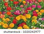 garden with multicolored... | Shutterstock . vector #1020242977