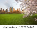 cherry blossom at sheep meadow... | Shutterstock . vector #1020254947