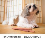 cute shih tzu dog bored of his... | Shutterstock . vector #1020298927